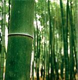 竹 イメージ画像